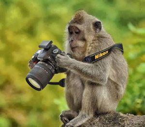mono fotografo